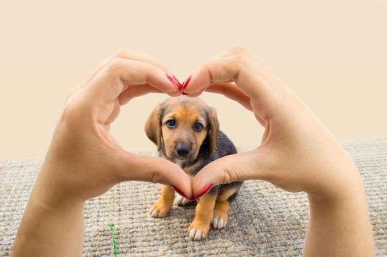 Não se apaixone por mulher que ama cachorros