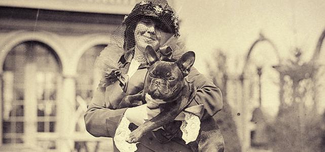 Imagem de Origem e História do Buldogue Francês