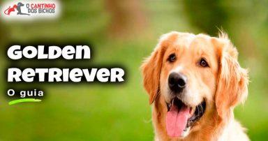 Cachorro Golden Retriever em destaque
