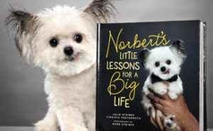 Norbert e seu livro