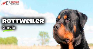 Cachorro Rottweiler em destaque