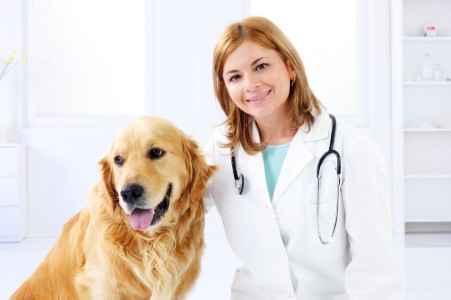 Veterinária com um Golden Retriever