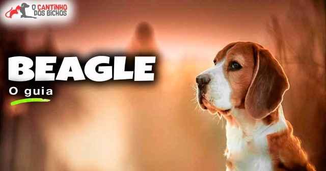 Cachorro Beagle em destaque