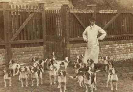História do Beagle