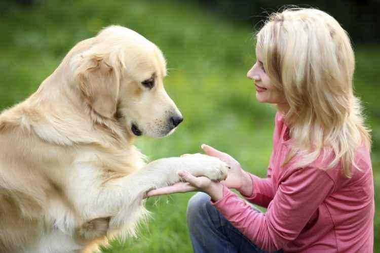 Amor por cachorro como se fosse um filho