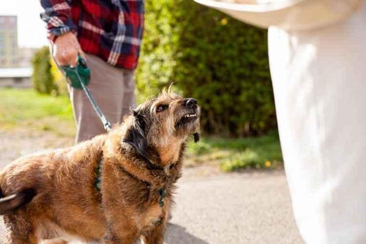 Cão-identificando-se-a-pessoa-é-boa-ou-ruim