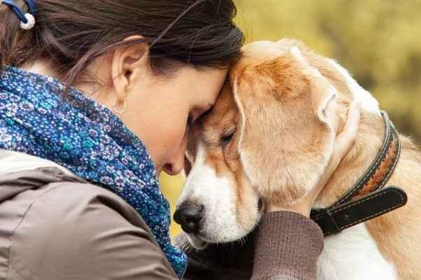 Cães sentem nossa dor