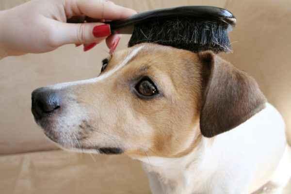 Escovando pelo curto do cachorro