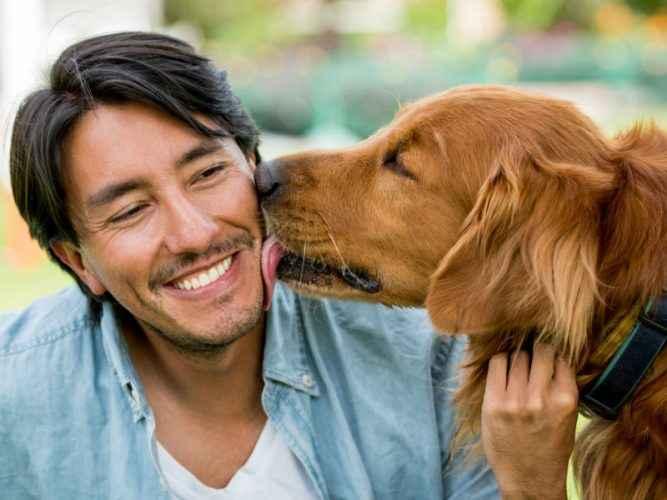 Homem sendo lambido pelo cão - ama tanto seu cao