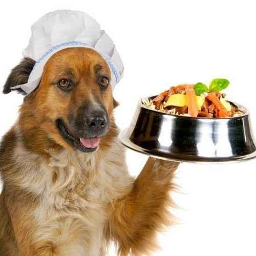 alimentos permitidos para cães