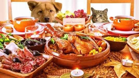 Alimentos ruins para cães