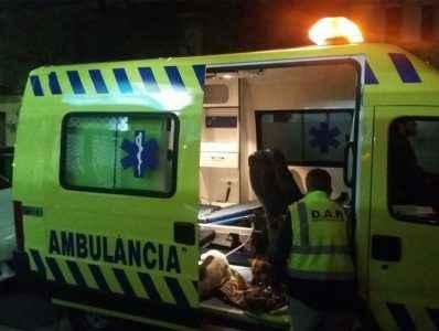 Ambulância para cães
