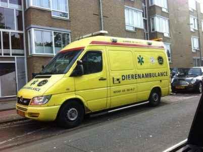 Ambulância para cães 2