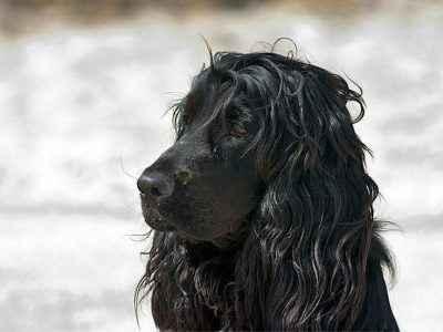 belo pelo de cachorro