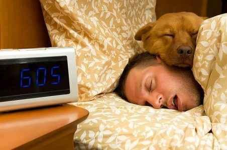 Benefícios dos cachorros