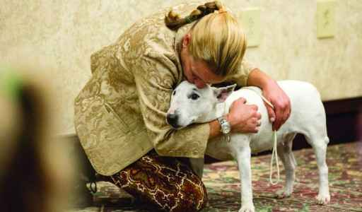 Cachorro Bull Terrier – Guia Definitivo da Raça