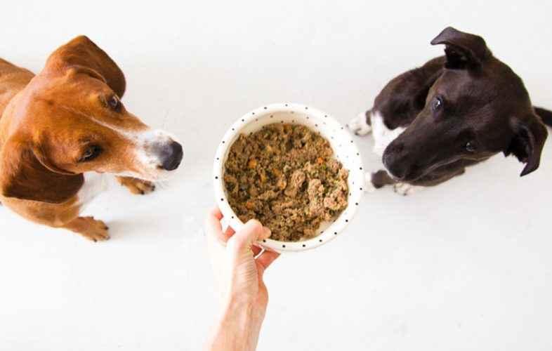 Dois cães e uma tigela de comida - cachorro ansioso