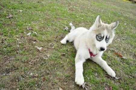 cachorro mascarado