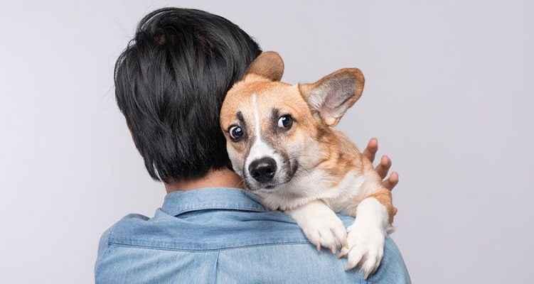 cachorro com olhar de medo