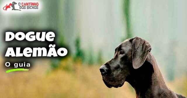 Cachorro Dog Alemão em destaque