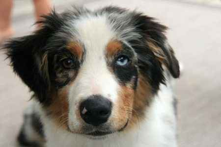 cachorro belo