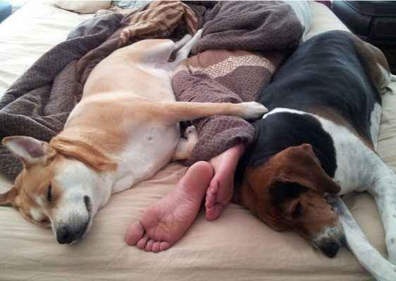 domindo na cama com cachorro