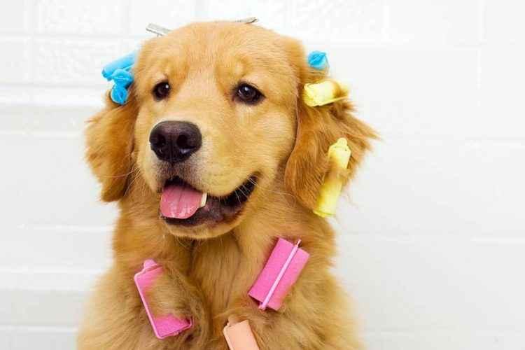 cão com rolinhos no pelo