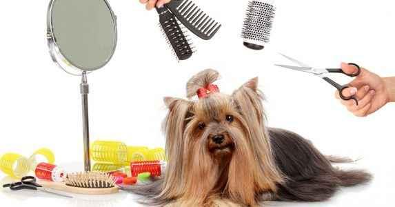 Higiene pelos de cachorro - York