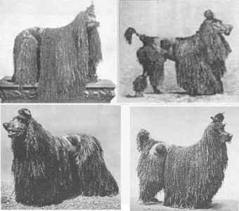 História do Poodle