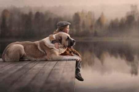 Cachorro grande com criança no lago