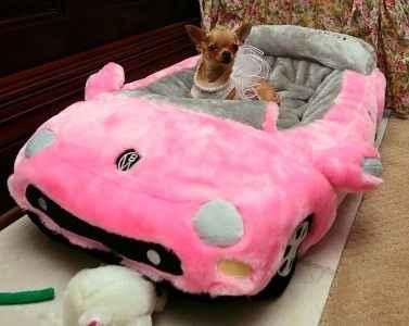 Cão de Madame no carrinho