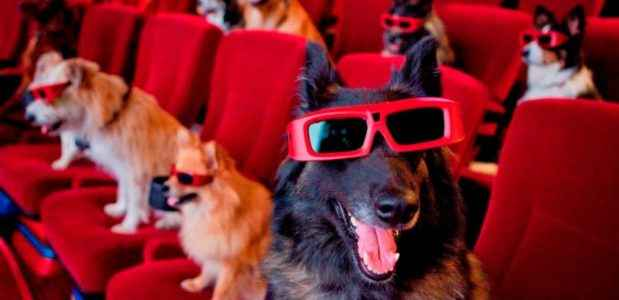 Cachorros dentro do cinema