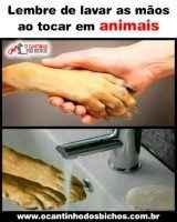 Tocando em animais