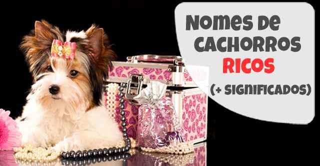 Nomes de Cachorros Ricos