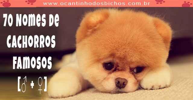 70 Nomes de Cachorros Famosos
