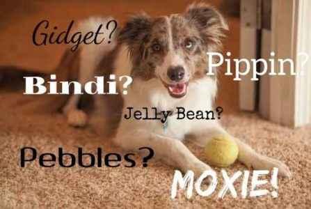 Nomes de Fêmeas de cães