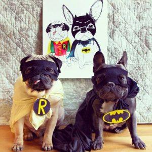 Pug e Bulldog Francês