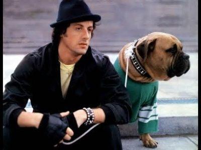 Rock Balboa e seu cachorro
