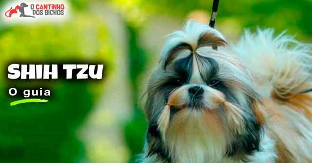 Cachorro Shih Tzu em destaque