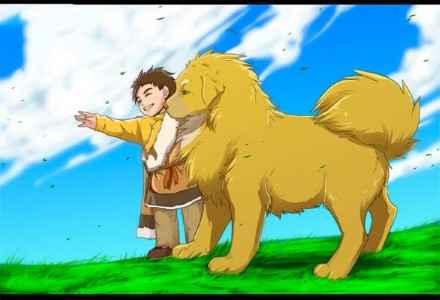 Cachorro tibetano chamado Dorje